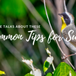 Uncommon Tips for Success | Nicky Saw